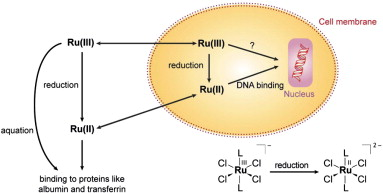 schemec2a03-c2a0reduction-pathways-of-ruiii-compounds-inside-and-outside-the-cell-dna-binding-bendable-metals-line-22-wow-data.